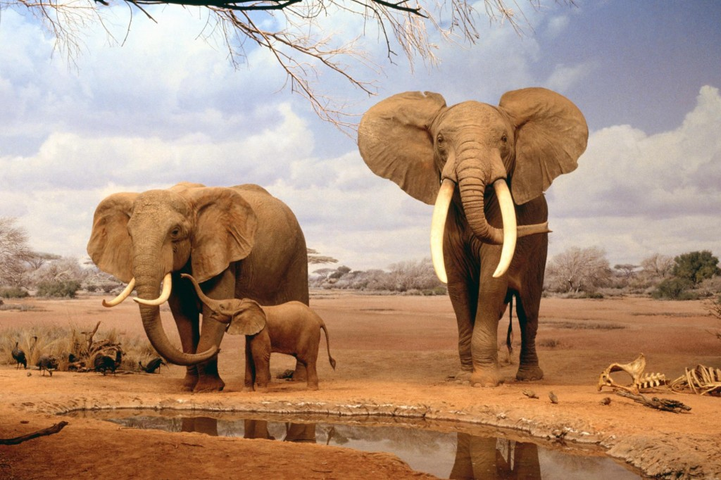 africa-elephants-summer-animals-desktop