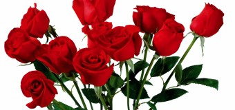 The Door of Love: Rose Day