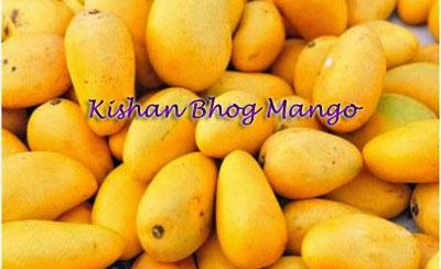 Kishan Bhog Mango