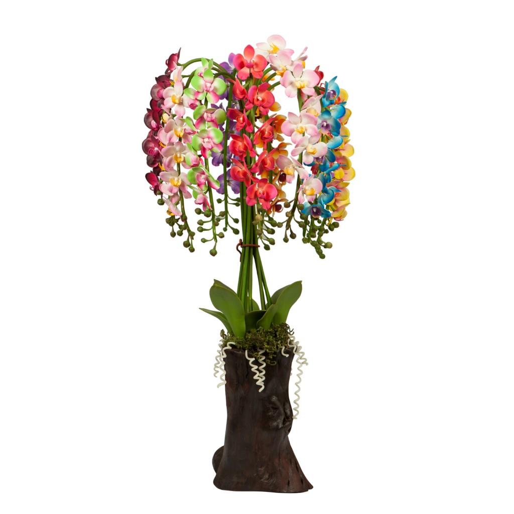 3 Feet Tall Phalaenopsis Orchid