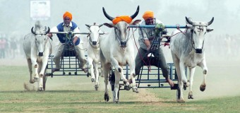6 Lesser Known Festivals of India