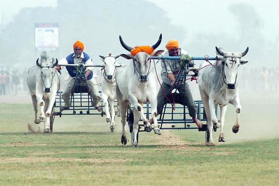 Kila Raipur Rural Olympics, Punjab