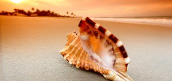Unknown Facts Worth Knowing About Conch Shell or Shankha